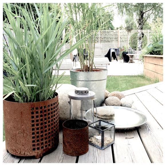 gräs,rost,fågelbad,altan,spaljé