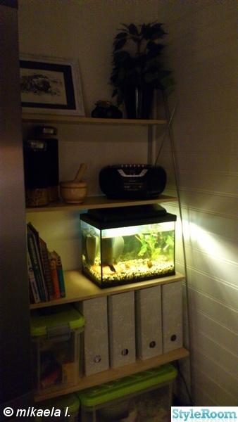 akvarie,akvarium,kök,hylla,radio