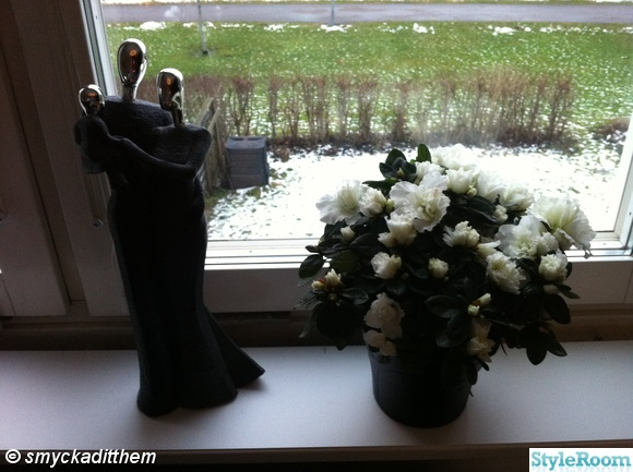 kruka,blomma,fönster,prynadspar