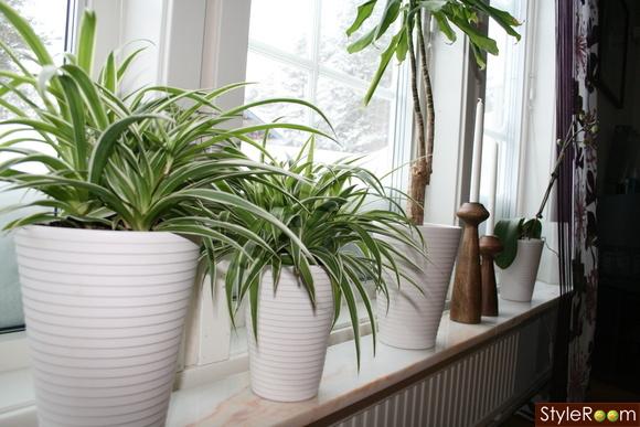 växter,lagerhaus