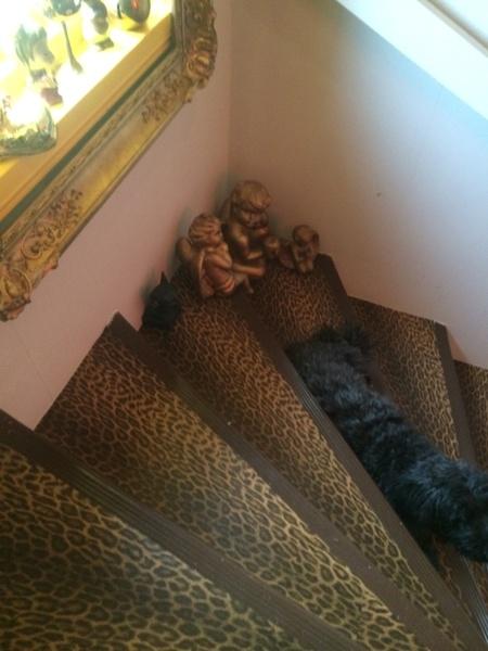 leopard,decotejp,trappa,trappsteg