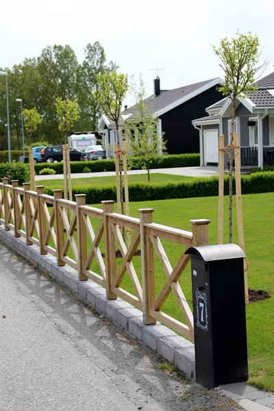 staket,träd,klotrobinia