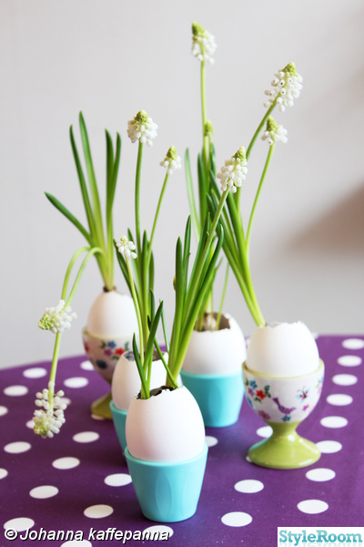 blommor,påsk,ägg,pärlhyacint,påskpynt