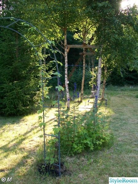 riddarsporre,humle,rosenbåge,trädgård