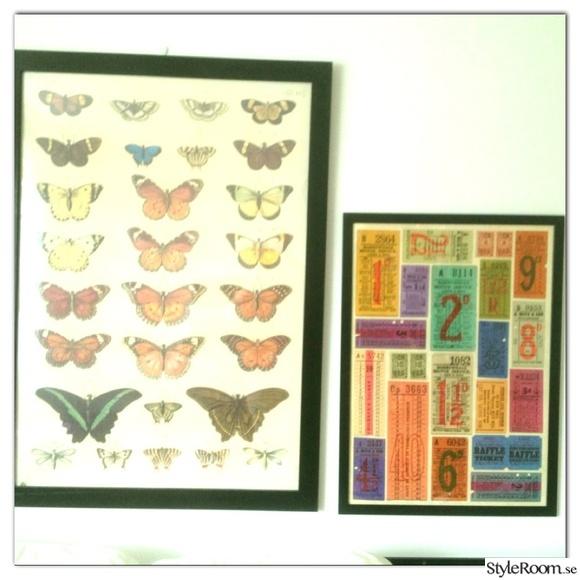 tavlor,fjäril,fjärilar,fjärilstavla,färger