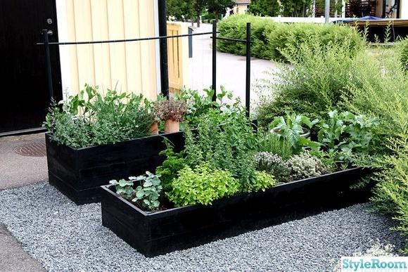 odlingslådor,linoljefärg,grönsaker,örter,örtkryddor