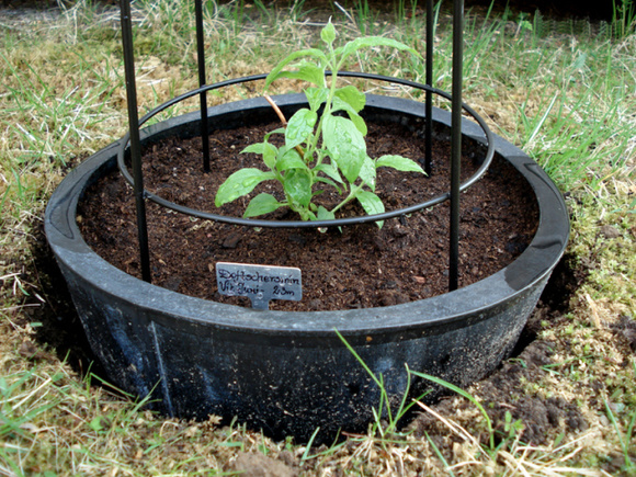 doftschersmin,diy,gds,återbruk,trädgård