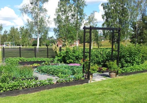trädgårdsland,grönsaksland,grönsaksodling,odling,odlingslådor