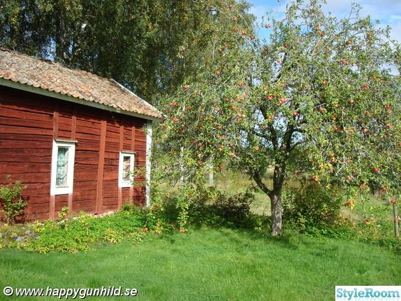 brygghus,Äppelträd