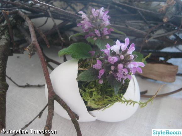 blomma,blommor,ägg,äggskal,påsk