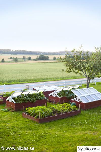 trädgård,odling,drivhus,drivbänk,köksträdgård