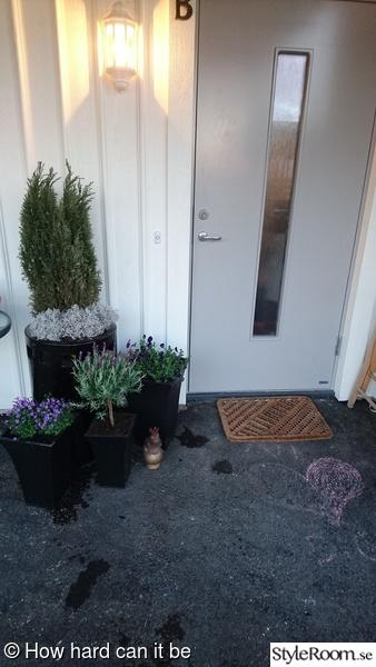 entre',blommor,blommor i krukor,ingång,ytterdörren