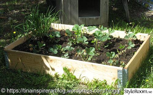 trädgård,odlingslåda,jordgubbsland