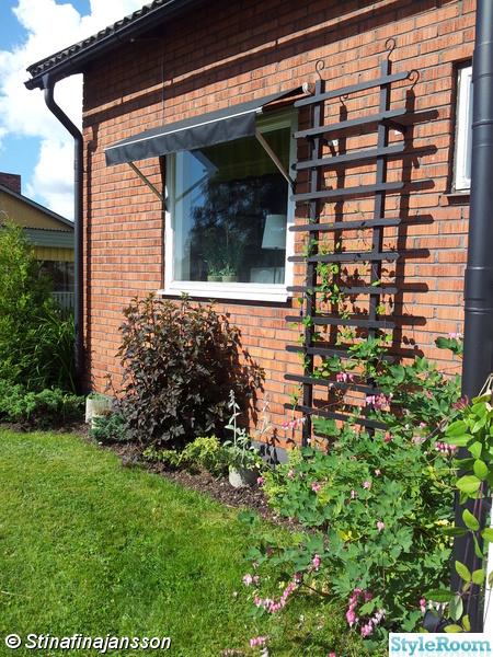 trädgård,svart spalje