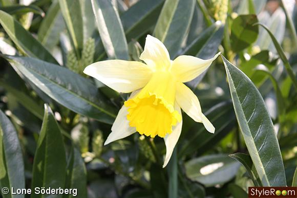 Inspirerande bilder på blommor