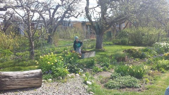kolonistuga,koloniträdgård,sandlåda,lek