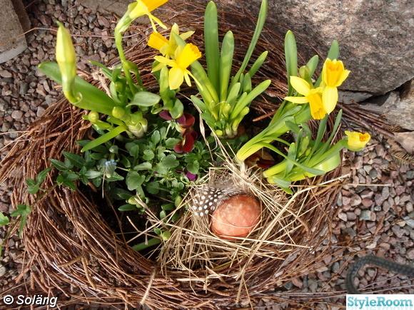 påskliljor,ägg