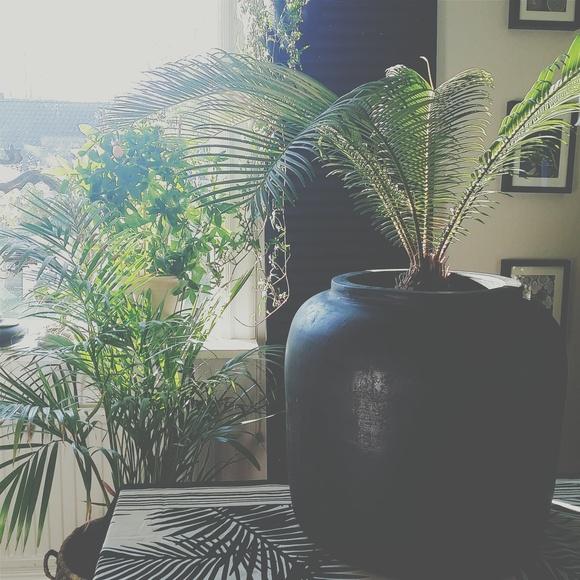urna,gröna växter,vardagsrum