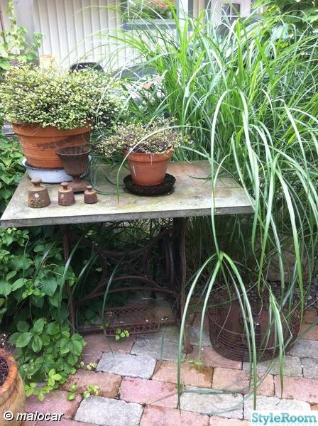 stenskiva,symaskinsunderrede,växter