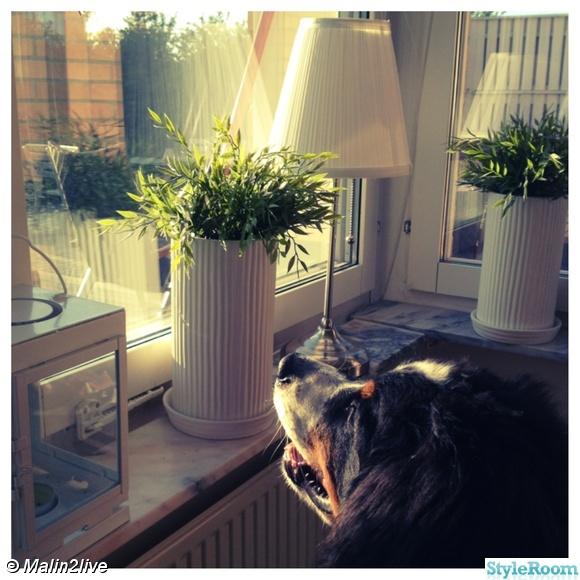 Bild på krukor fönsterkarm - Vardagsrum före och mittimellan :) av ...