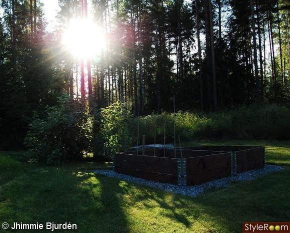 odlingslådor,vinbärsbuske