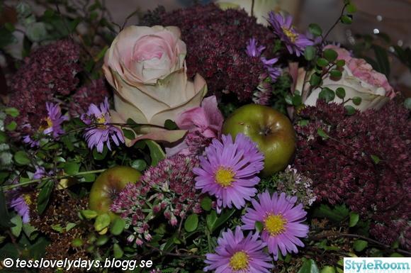 ros,blommor dekoration,apple,trädgårdsblommor