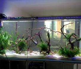 Akvarium som rumsavdelare