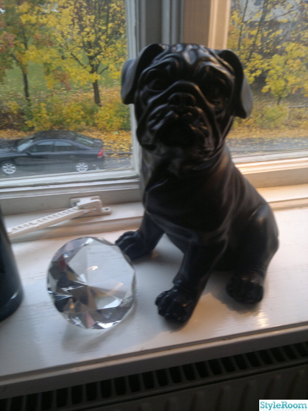 fönster,hund,diamant