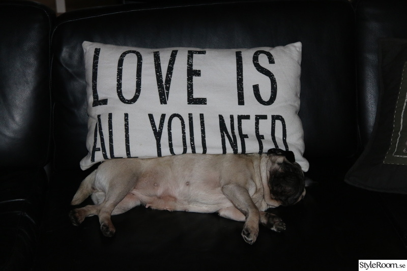 soffa,svart soffa,vardagsrum,mops,love is all you need
